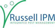 IPM Russel